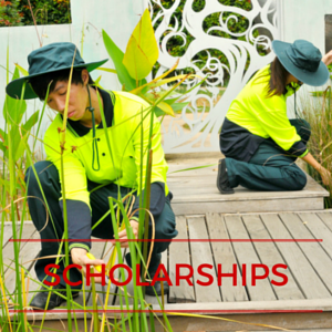 skilling australia foundation scholarships